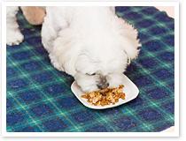 ジョリーカフェの看板犬サニー