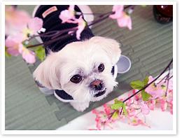 春の愛犬撮影会